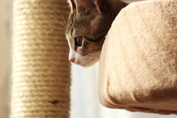 猫の飼育費用と初期費用!1匹飼うと月1万円かかる?