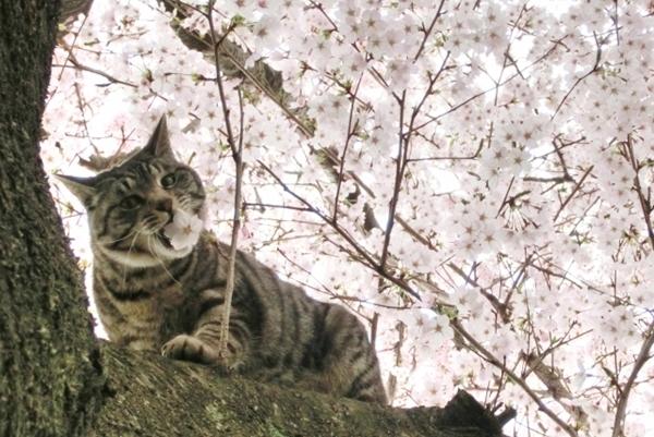 猫のノミ取りシャンプーは効果なし?どうするノミ対策!!3
