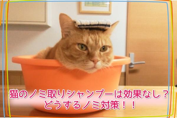 猫のノミ取りシャンプーは効果なし?どうするノミ対策!!5