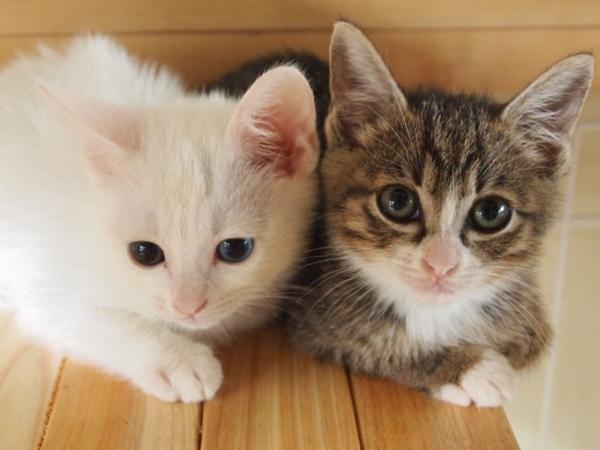 猫の雑種の寿命はどのくらい?純血種より長いってホント?2