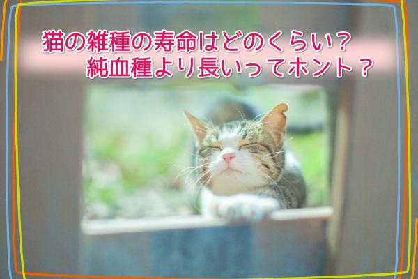 猫の雑種の寿命はどのくらい?純血種より長いってホント?6