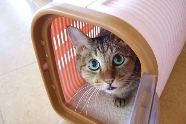 猫の飼育費用と初期費用!1匹飼うと月1万円かかる?3