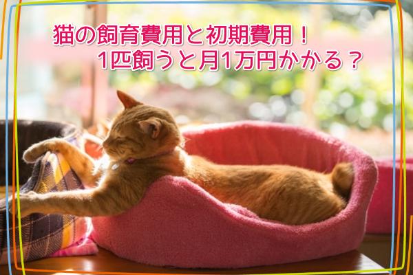 猫の飼育費用と初期費用!1匹飼うと月1万円かかる?6