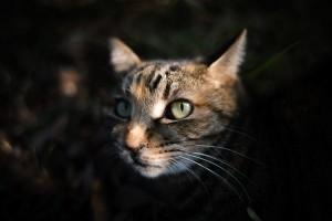野良猫,飼う,注意点2