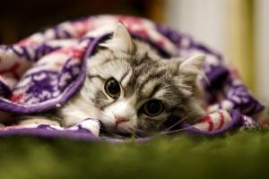 猫 毛玉 吐かない