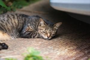 野良猫,飼う,注意点4