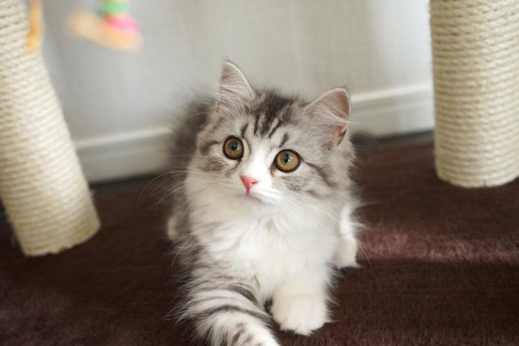 猫の去勢手術の方法とは。術後はスプレー行動やマ …