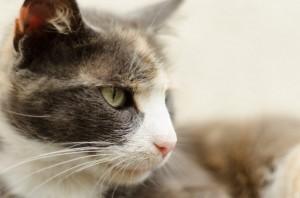 猫,目やに,取り方