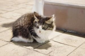 猫 2匹目 威嚇 対面