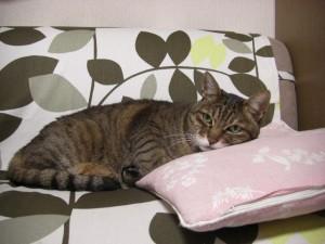 猫,睡眠,痙攣2