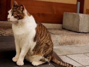 猫 2匹目  威嚇 対面3