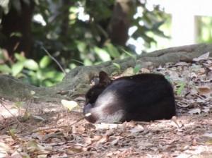 黒猫,不吉,由来,幸運5
