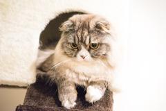猫の寒さ対策冬留守番暖房3
