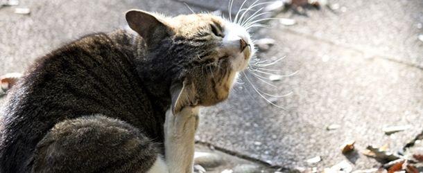 猫 死ぬ前 姿を消す 真相2