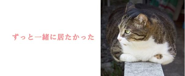 猫 死ぬ前 姿を消す 真相 (2)