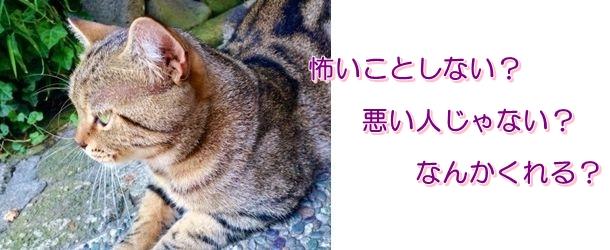 野良猫 なつく 方法 (2)
