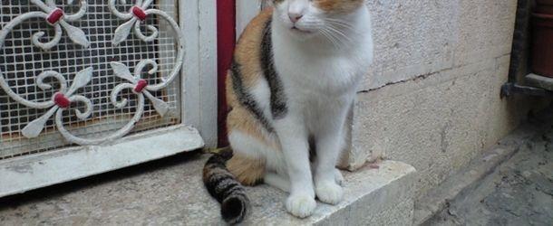 猫 しっぽ 気持ち パタパタ