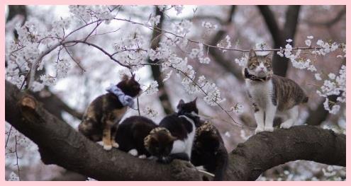 謎多き猫の集会!集まる理由を参加猫から解明しよう!3