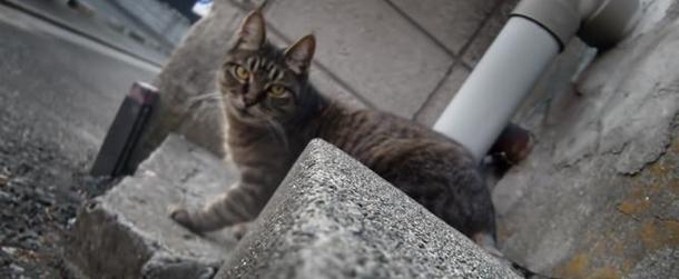 謎多き猫の集会!集まる理由を参加猫から解明しよう!2
