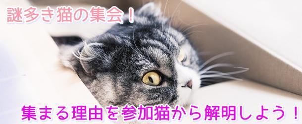 謎多き猫の集会!集まる理由を参加猫から解明しよう!5