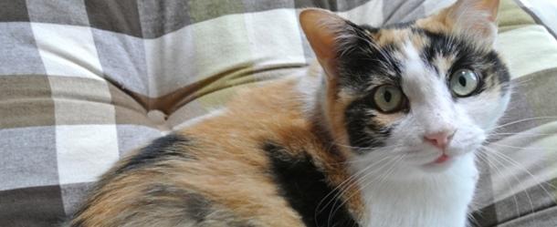 猫は柄で性格が違う?!初心者でも飼いやすいのはどの子だ!!4