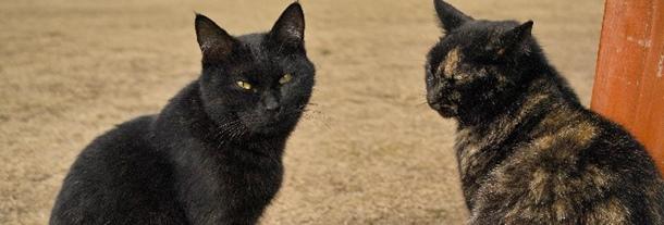 猫は柄で性格が違う?!初心者でも飼いやすいのはどの子だ!!