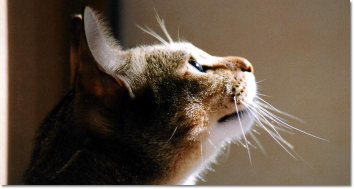 愛猫のひげが折れたり抜けたりしたらヤバい!?猫好き日誌!3