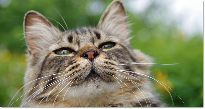 愛猫のひげが折れたり抜けたりしたらヤバい!?猫好き日誌!2