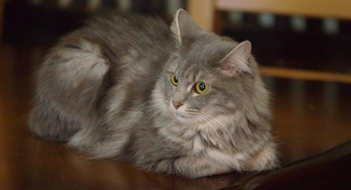 野良猫とペットショップの猫の違い!飼いやすいのはどっち!?