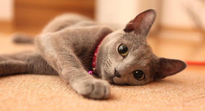 野良猫とペットショップの猫の違い!飼いやすいのはどっち!?2