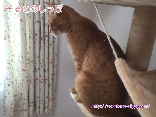 【画像あり】キャットタワーのおすすめ!多頭飼いの私がコレを選んだ理由!!3