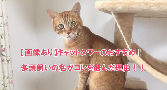 【画像あり】キャットタワーのおすすめ!多頭飼いの私がコレを選んだ理由!!6