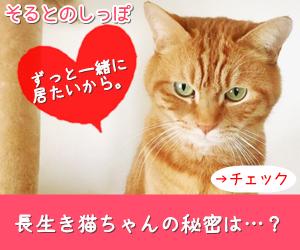 長生き猫とシンプリー