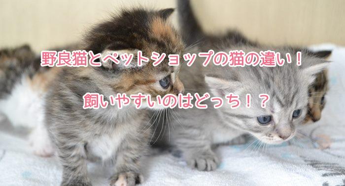 野良猫とペットショップの猫の違い!飼いやすいのはどっち!?3