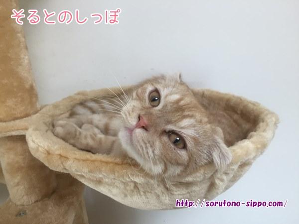 【画像あり】キャットタワーのおすすめ!多頭飼いの私がコレを選んだ理由!!