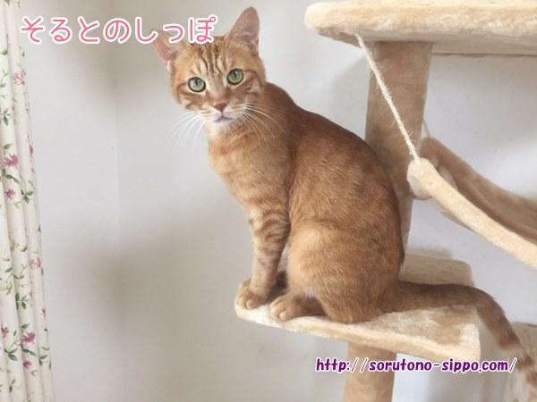 【画像あり】キャットタワーのおすすめ!多頭飼いの私がコレを選んだ理由!!4