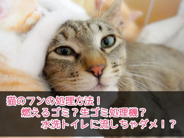 猫のフンの処理方法!燃えるゴミ?生ゴミ処理機?水洗トイレに流しちゃダメ!?4