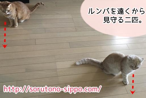 猫はルンバを怖がらないのか4